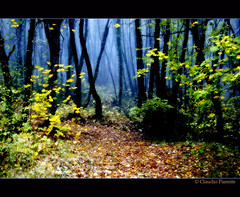 Fiabe d'Autunno /      ...   Fables in autumn (swaily -NON pro - Claudio Parente) Tags: autumn nikon nebbia autunno soe luce italians abruzzo gmt fiabe superaplus aplusphoto platinumheartaward vosplusbellesphotos artofimages saariysqualitypictures updatecollection bestcapturesaoi yourwonderland magicunicornverybest newgoldenseal