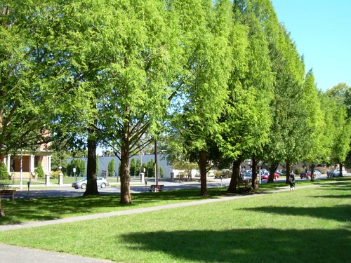 Academy Green Park