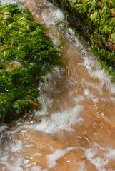 Turbulent (Craig Jewell Photography) Tags: blue seaweed colour green water rock flow iso100 rocks colours sydney sunny bluesky noflash f16 wash kelp newsouthwales backwash narrabeen turbulence ebb rockpool waver 105mm turbulent sigmalens sigma105mm 120sec turimetta 20090927113404igp0951 craigjewellphotography
