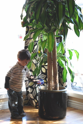 Big Plant, Little Boy