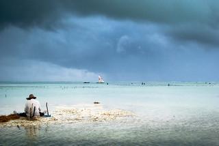 Le pêcheur de Zanzibar