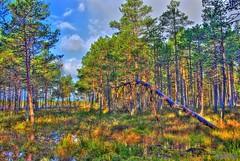 Uljaste bog (Kaarin Vask) Tags: autumn trees tree nature water photoshop geotagged estonia pentax 2009 hdr km est eesti photomatix da1855mm lnevirumaa vanagram hdrdreams uljaste