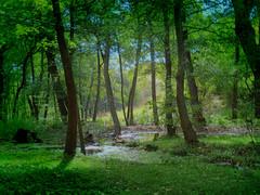 [フリー画像] [自然風景] [森林/山林] [緑色/グリーン]        [フリー素材]