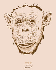 Monkey Portrait (gravideo interactive) Tags: portrait monkey vector maymun