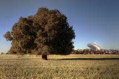 Parkes Observatory (WilliamBullimore) Tags: tree field landscape au australia science newsouthwales hdr antenna hdri parkes thedish radioantenna digitalcameraclub parkesobservatory parkesradiothermaltelescope