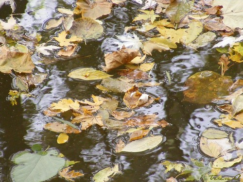 Leaf Canoes
