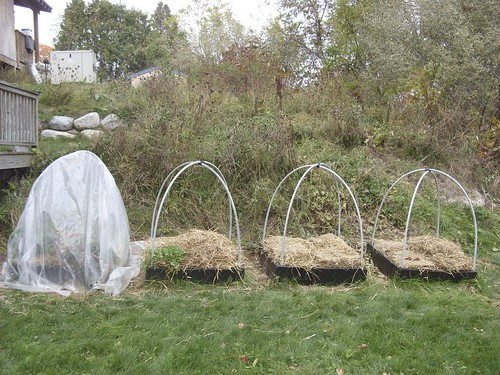 covering the raised beds