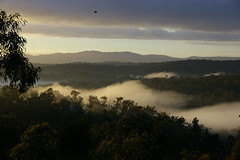 early morning sunrise ([Suse]) Tags: morning trees mist sunrise hills