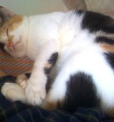 睡成這樣之緩兒撒嬌的方式就是跟你一起睡午覺