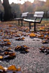GGD_9535 (Gareth-Davies) Tags: park autumn light field leaves chair bokeh seat benches e17 railings depth walthamstow gloden llod