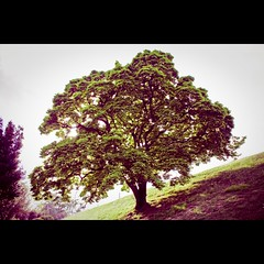 The Tree (Pikaglace) Tags: tree photoshop canon gimp pau arbre vegetal beforeafter lightroom paintnet 450d