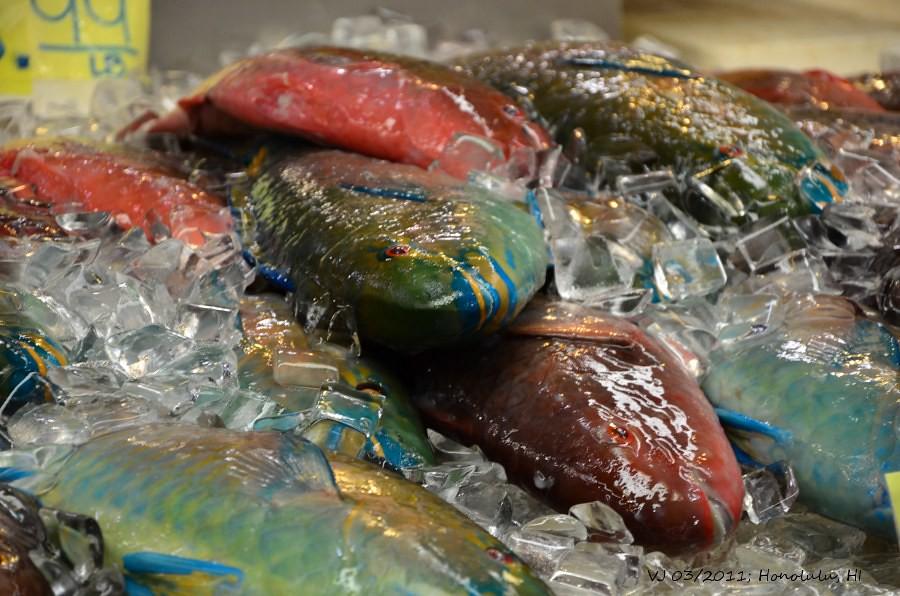 Glamorous Fish