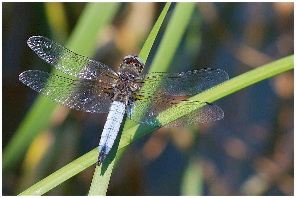Photos de la Rencontre Macro Papillons & Libellules du Sud 2011 (21 & 22 Mai) 5751205397_c6792ff4b6_o