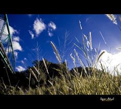 B l u e  M o r n i n g - 3 (Igor V. Ahn) Tags: morning blue sky bleu ciel nuages matin herbes d90 igorahn