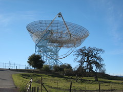 The Dish Photo