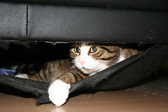 Bolle in the couch (jurjen_nl) Tags: cats bolle