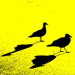 Shadows Play for the Birds ~ (Dominique Guillochon) Tags: california usa seagulls art beach colors yellow jaune sand waves shadows unitedstates sandiego silhouettes sable beachlife pb pacificbeach plage californiawinter californiacoast ombres supershot seagullsandtheirshadows mouettesetleursombres silhouettesetombres