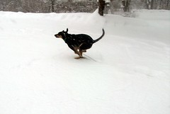 Tut_snow11809_run