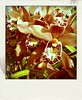084:365 Orchids