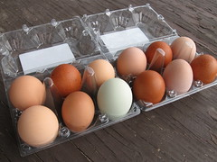 Jacob's Reward Rainbow Eggs
