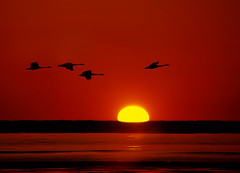 Over the Horizon (8230This&That) Tags: sun nature birds sunrise dawn bay geese maryland chesapeake brownies calvert chesapeakebay bayfrontpark calvertcounty cheapeakebeach goldstaraward