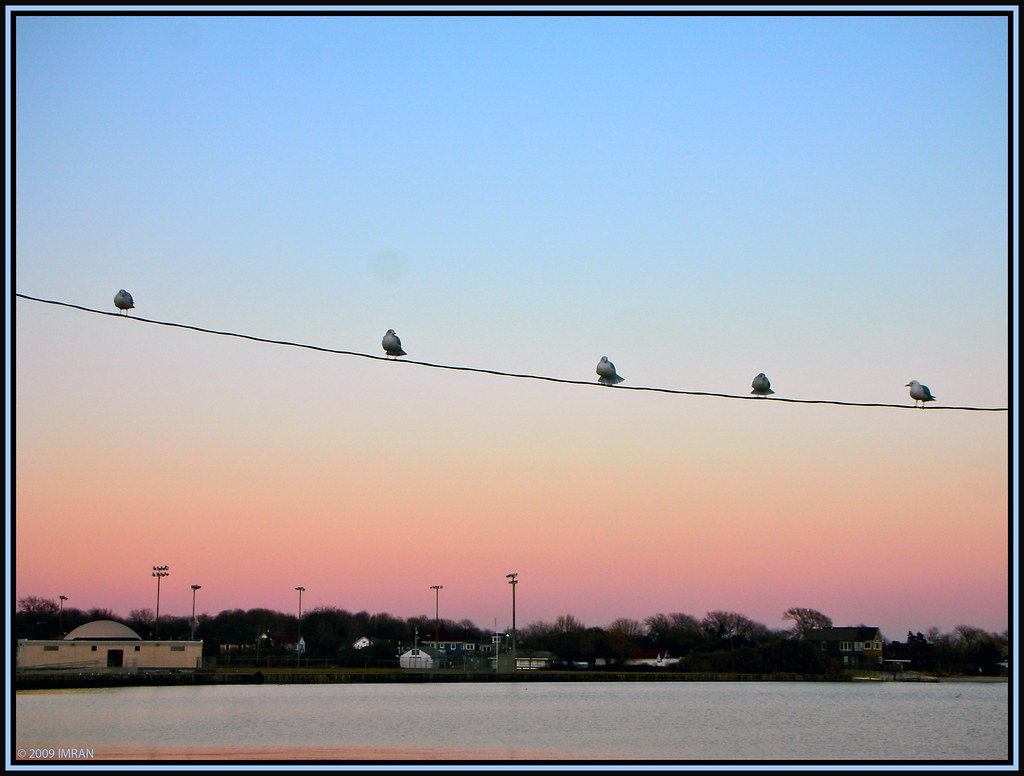 Bird(s) On A Wire, Not Ducks In A Row - IMRAN™