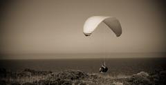 Volar... (InVa10) Tags: sea españa cliff man portugal sepia canon eos mar fly spain badajoz vegetation 450 hombre horizont acantilado horizonte meco parachute parapente vegetacion paracaidas extremadura volar inva 450d