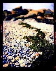 """The Shells She Sells Are Surely Seashells"" (*junket*) Tags: seaweed film norway mediumformat landscape xpro crossprocessed rocks bokeh crossprocess pebbles 120film shel 2009 tromsø pentax6x7 pentax67 smctakumar autaut kodakektachromeepr64 ©dannyzveglicallrightsreserved 45mmf40"