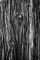 Stream of Bark (Dimpleicious) Tags: blackandwhite bw tree nature nikon bark d40 treeknots huntingtonlibraryandgardens natureycrap lookslikeflowingwater