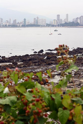 Picking blackberries by the beach