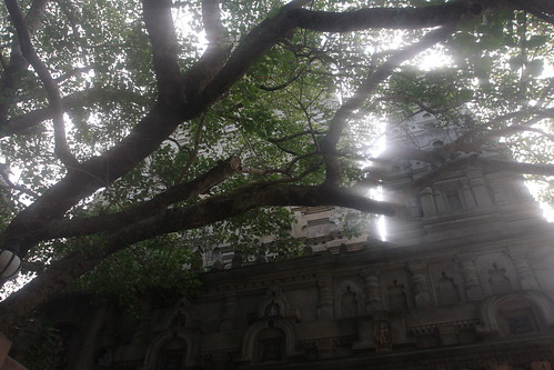 Under Buddha's Bodhi Tree In Bodhgaya