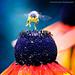 Fly Away par P.Baranowski Photography