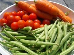 Augustus oogst Cherry tomaatjes, wortels en sperzieboontjes