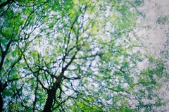 (Syka Lê Vy) Tags: morning trees love film girl 35mm sunday vietnam vy fujifilm analogue canonae1 2009 lê syka vắng fujifilmsp3000 fromsykawithlove sykalevy lehoangvy sundayspirit