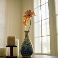 (leslie*thomson) Tags: 120 6x6 tlr film morninglight vase gerberas rolleicord