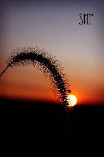 . sunset and weeds .