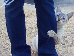 mew ([moguel]) Tags: pet wisconsin cat nice muy felino gatito loqueseamen