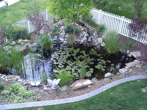 The pond on May 27th - I like it better less overgrown!