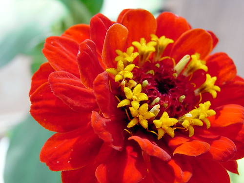 Flower-039