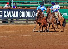 Expointer 2009 (Cristina Gehlen) Tags: cristina cavalos cavalo 2009 expointer esteio crioulo gehlen provas cavalocrioulo paleteada cristinagehlen raacrioula
