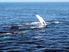Whale_group_Fin2