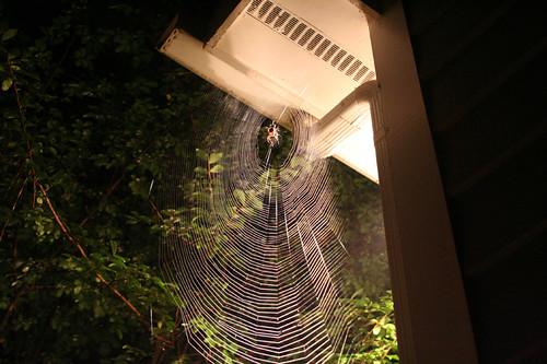 huge orbweaver web