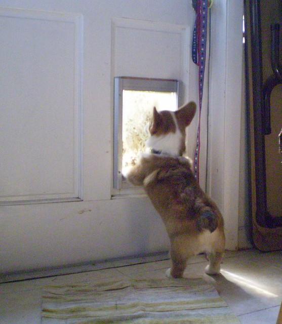 Roger discovers the doggie door