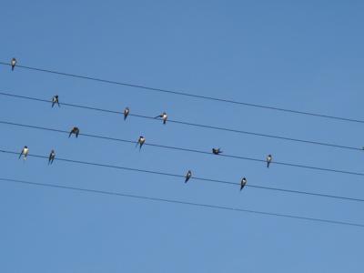 birdmusic4