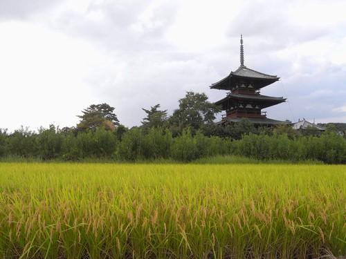 法起寺三重塔とコスモス-10