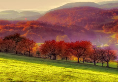 Autumn (ceca67) Tags: autumn trees panorama orange fall nature switzerland cherries legacy visualart tistheseason jesen objectiveart flickrartist worldbest goldstaraward vanagram saariysqualitypictures redmatrix photographymypassion flickrvault trolledproud