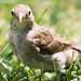 Little Bird in the Grass