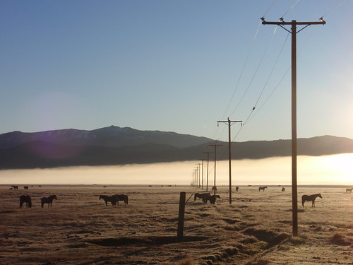 Telephone Poles 01