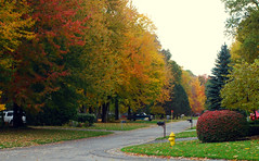 Autumn  on Maplewoods Lane (blmiers2) Tags: street autumn autumnfoliage trees fallleaves newyork color tree fall nature beautiful leaves season landscape geotagged leaf nikon october colorful seasons fallcolor fallcolors branches autumnleaves autumncolors fallfoliage foliage mystreet autumntrees autumncolor fallfoilage autumntree autumnfall leavesautumn newenglandautumn seasonfall autumntheme theseasons autumnpictures autumnseason leafautumn autumnstreet autumnmaple picturesoffall forautumn leaveschangecolor autumnmonths blm18 blmiers2
