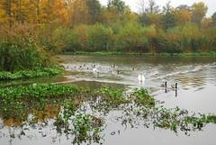 Fleet Pond1